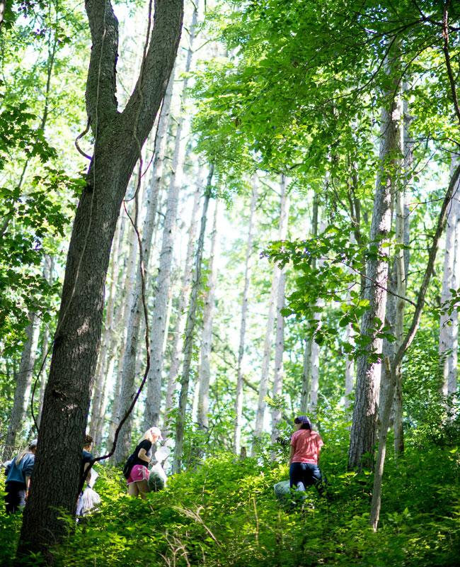 Hikers in the forest in Ann Arbor